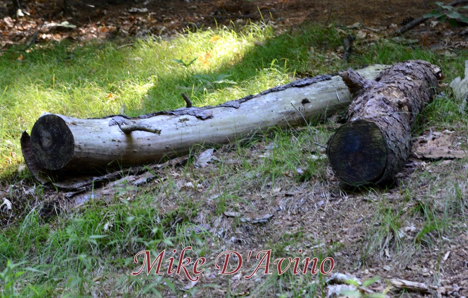 Farmington Canal Heritage Trail (39)