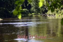 Farmington River Trail (54)