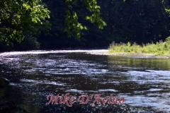 Farmington River Trail (55)
