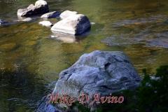 Farmington River Trail (88)