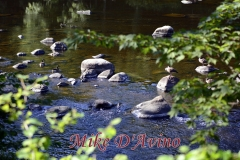 Farmington River Trail (90)