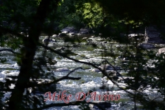 Farmington River Trail (93)