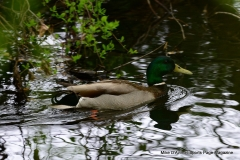 Farmington Canal Linear Park Cheshire - Photo # (102)