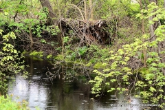 Farmington Canal Linear Park Cheshire - Photo # (41)