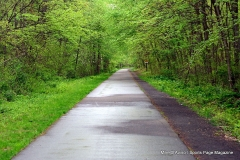 Farmington Canal Linear Park Cheshire - Photo # (63)