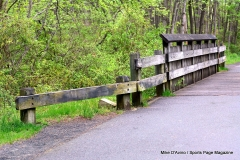 Farmington Canal Linear Park Cheshire - Photo # (64)