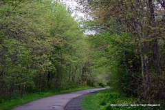Farmington Canal Linear Park Cheshire - Photo # (88)