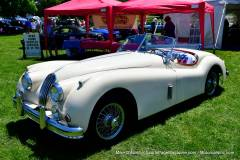 Gallery Motorsports; Lyman Orchard Jaguar Show - Photo # 093