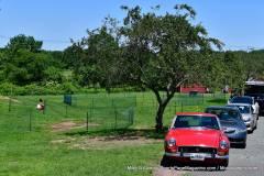 Gallery Motorsports; Lyman Orchard Jaguar Show - Photo # 362