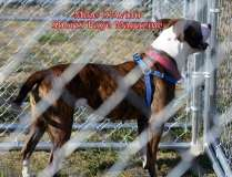 The 2016 Dream Ride Experience, Adopt a Dog, by Mike # (13)