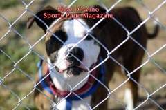 The 2016 Dream Ride Experience, Adopt a Dog, by Mike # (14)