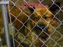 The 2016 Dream Ride Experience, Adopt a Dog, by Mike # (33)