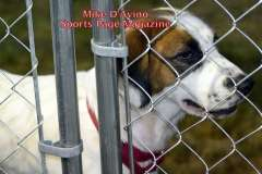 The 2016 Dream Ride Experience, Adopt a Dog, by Mike # (35)
