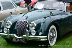 Lyman Orchards Jaguar Car Show - Photo # 071