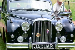 Lyman Orchards Jaguar Car Show - Photo # 116