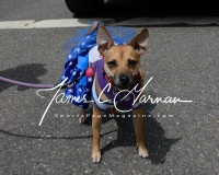 2017 Seymour CT Memorial Day Parade - Photo (37)