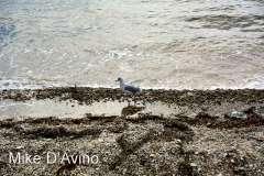 Falmouth, Cape Cod, MA (4)