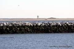 2016-11-12 Cape Cod Provincetown - Photo # (110)