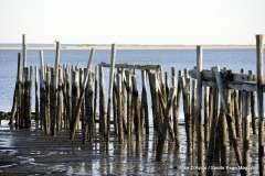 2016-11-12 Cape Cod Provincetown - Photo # (149)