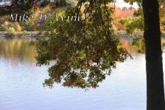 Fall Photos From Wolcott CT's Mill Pond Way # (102)