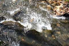 Fall Photos From Wolcott CT's Mill Pond Way # (108)