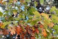 Fall Photos From Wolcott CT's Mill Pond Way # (111)