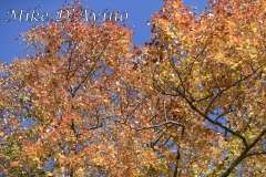 Fall Photos From Wolcott CT's Mill Pond Way # (112)