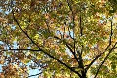Fall Photos From Wolcott CT's Mill Pond Way # (113)