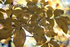 Fall Photos From Wolcott CT's Mill Pond Way # (115)