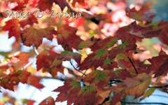 Fall Photos From Wolcott CT's Mill Pond Way # (117)