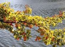 Fall Photos From Wolcott CT's Mill Pond Way # (119)