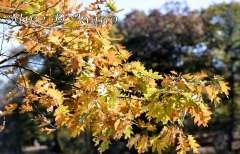 Fall Photos From Wolcott CT's Mill Pond Way # (120)