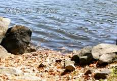 Fall Photos From Wolcott CT's Mill Pond Way # (123)