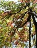 Fall Photos From Wolcott CT's Mill Pond Way # (125)