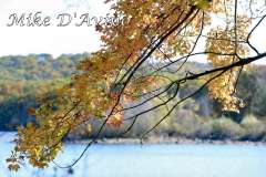 Fall Photos From Wolcott CT's Mill Pond Way # (127)