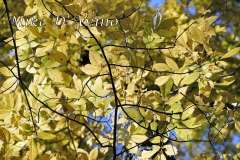 Fall Photos From Wolcott CT's Mill Pond Way # (128)