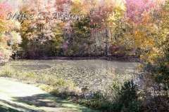 Fall Photos From Wolcott CT's Mill Pond Way # (13)
