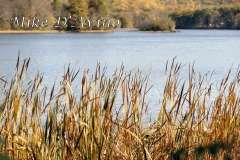 Fall Photos From Wolcott CT's Mill Pond Way # (132)