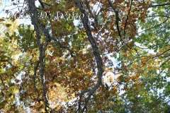 Fall Photos From Wolcott CT's Mill Pond Way # (135)