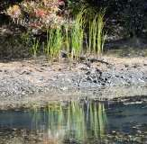 Fall Photos From Wolcott CT's Mill Pond Way # (141)