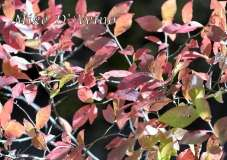 Fall Photos From Wolcott CT's Mill Pond Way # (142)