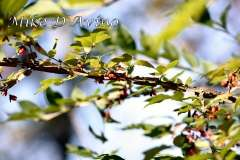 Fall Photos From Wolcott CT's Mill Pond Way # (144)