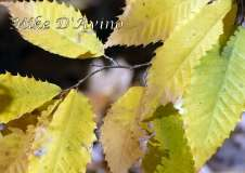 Fall Photos From Wolcott CT's Mill Pond Way # (150)