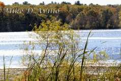 Fall Photos From Wolcott CT's Mill Pond Way # (165)