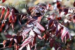 Fall Photos From Wolcott CT's Mill Pond Way # (173)