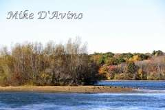 Fall Photos From Wolcott CT's Mill Pond Way # (200)