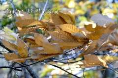 Fall Photos From Wolcott CT's Mill Pond Way # (208)