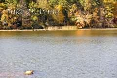 Fall Photos From Wolcott CT's Mill Pond Way # (224)