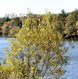 Fall Photos From Wolcott CT's Mill Pond Way # (226)