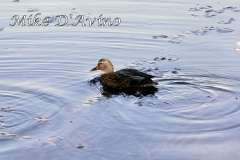 Fall Photos From Wolcott CT's Mill Pond Way # (57)